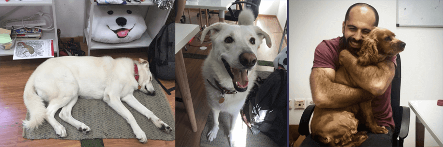 Doggos at the Snyk Office